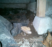 MSP Mold Inspection in Crawlspace